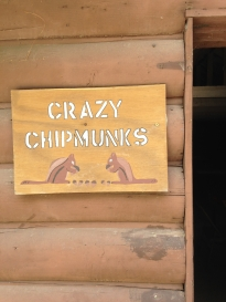 Crazy Chipmunks